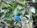 Observação de Aves, Meditação e Caminho Interior