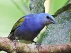 Observação de Aves e o Amor a Natureza